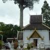 Tree Pillar Or Inthakhin