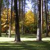 Trees At Finch Arboretum