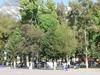 Trees Plaza Huejotzingo