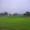 Tripura Rice