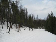 Trout Lake Trail At Glacier - Montana - USA