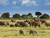 Tsavo East National Park Elephant Herd