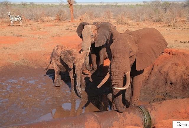 Magical Tsavo Safari - 3 Days 2 Night Photos
