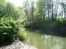 Tualatin River At Rood Bridge Park - Hillsboro OR