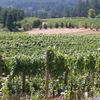Tuenge Vines OR