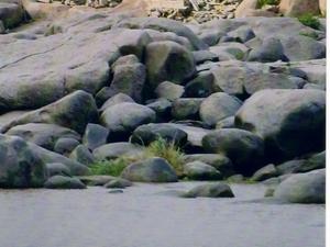 Tungabhadra río