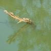 Turtle Kaziranga