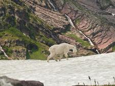 Two Medicine Pass Trailviews - Glacier - Montana - USA
