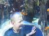 Anemonefish In Two Oceans Aquarium
