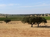 Typical Country Sight Of The Alentejo