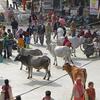 Typical Haridwar