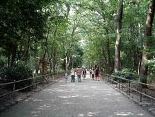This Pathway Leads Through Tadasu No Mori