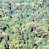 Toonumbar National Park