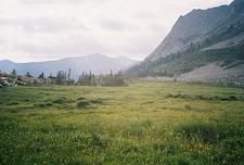 Tamarack Meadow