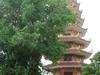 The Buddha Gem Tower