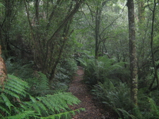 Temperate Rainforest In Great Otway National Park