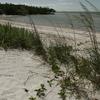 Beach Shore Line And Vegetation