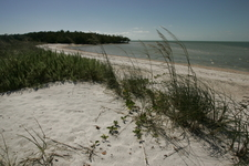 Beach Shore Line And Vegetation