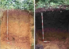 Left - Nutrient-Poor Soil And Right - Terra Preta