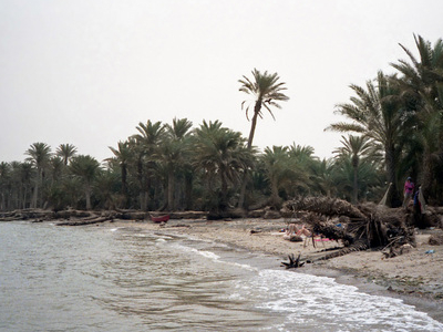 Tihama On The Red Sea