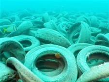 Osborne Reef
