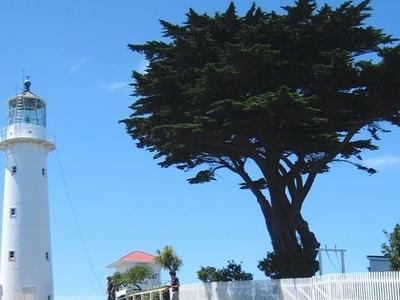 Tiritri Matangi Lighthouse And Macrocarpa Tree