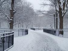 A Freshly Fallen Snow
