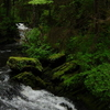 An Area In The Tongass National Forest