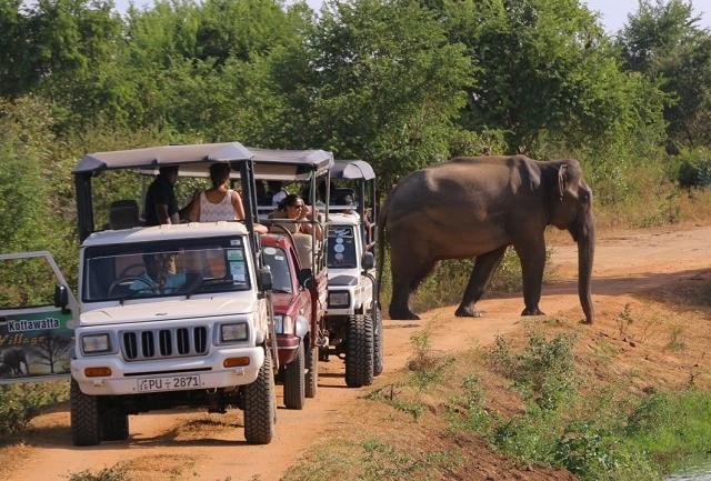Udawalawe National Park Jeep Safari - Half Day Safari Photos