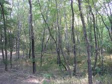 Una Del Oso Trail 201 - Tonto National Forest - Arizona - USA