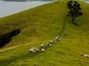 @ Urupukapuka Island - Northland