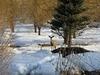 UT Wasatch - View Deer