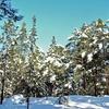 Uutela Forest Winter View - Helsinki Finland