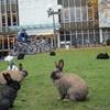 Rabbits On Campus