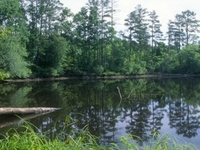 Uwharrie National Forest