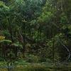 Rainforest On Ulva Island