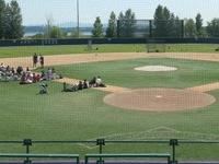 Ballpark Husky