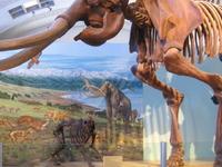 Museu de História Natural de Utah