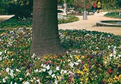 Valencia University Botanical Gardens. Valencia