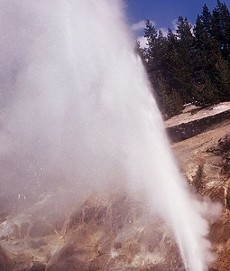 Valentine Geyser - Yellowstone - USA