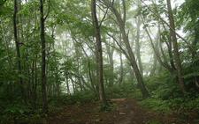 Valentine Trail 551 - Tonto National Forest - Arizona - USA