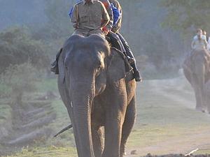 Van Vihar National Park Elephant Rides