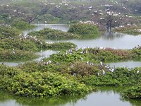 Santuario de Aves Vedanthangal