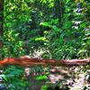 Vegetation In Camaragibe