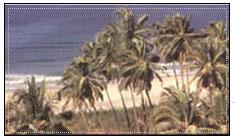 Velneshwar Beach