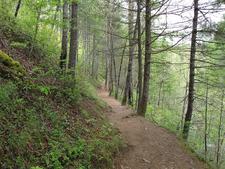 Verde River Trail 11 - Tonto National Forest - Arizona - USA