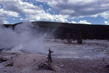 Veteran Geyser - Yellowstone - USA