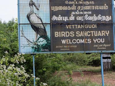 Vettangudi Bird Sanctuary Sivagangai
