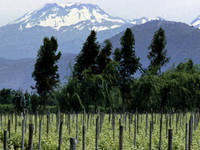 Miguel Torres Winery