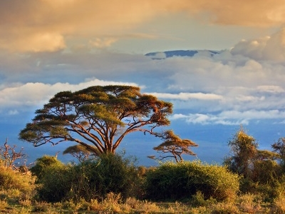 View Amboseli National Park - Kenya